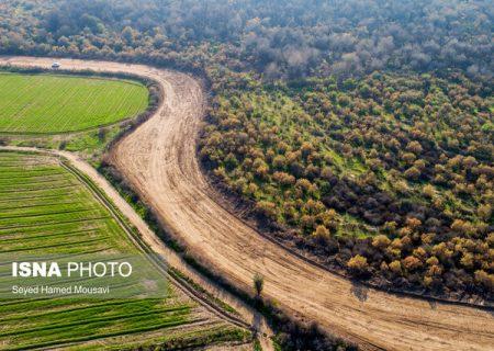 بیانیه جمعی از شهروندان شوش در خصوص تعرض به جنگلهای کرخه