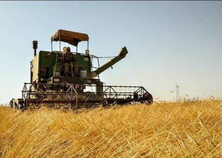 ۱۸۰ هزار تن گندم از مزارع شوش  برداشت می شود
