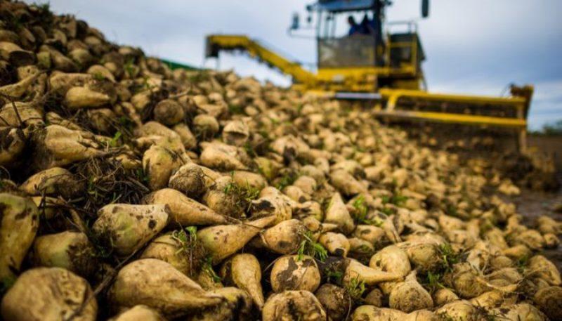 امام جمعه  شوش:  مسئولان، صدای کشاورزان شوشی را بشنوید، پیش از آنکه خیلی دیر شود!